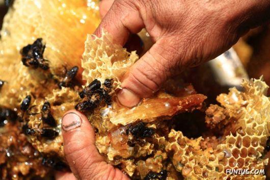 The Collectors Of Wild Honey