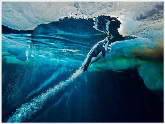 The Best Of Nat Geo Pictures Of 2012