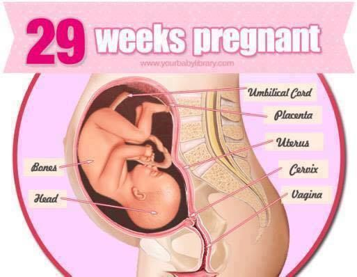 Pregnancy Stages 38 Weeks