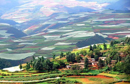 The Beautiful Fields Of China