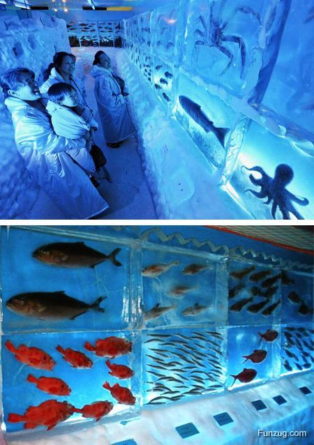 Top 10 Coolest Aquariums