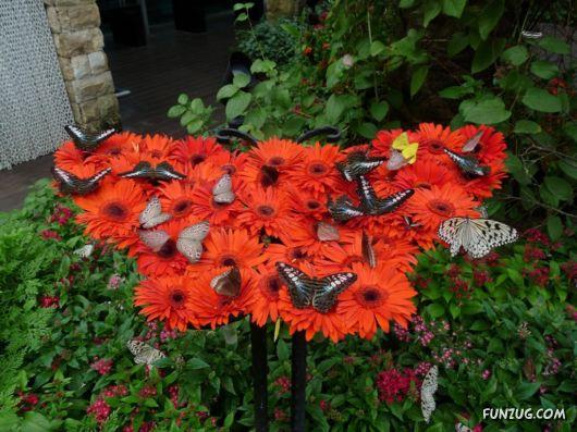 Beautiful Butterfly Wallpapers