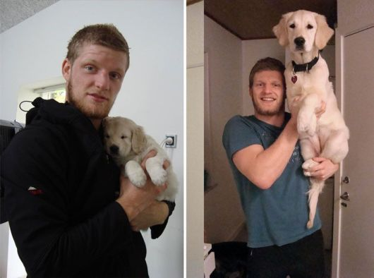 Before And After Photos Of Dogs Growing Up