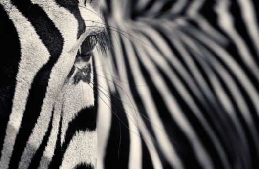 Captivating Black And White Animal Portraits