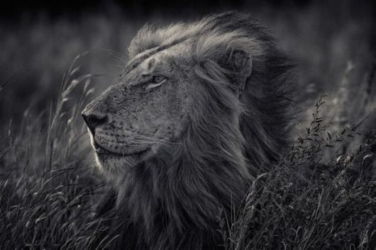 Captivating Black And White Animal Portraits